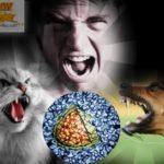 Что такое агрессия и агрессивность и как с ней справиться