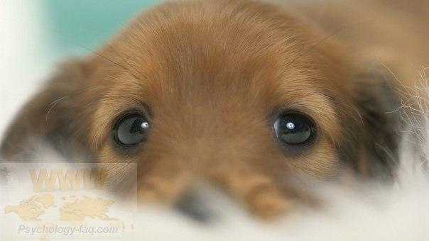 В глазах животного - душа