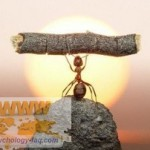 Настойчивость и преодоление — качества сильного человека