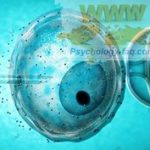 Допускается ли экстракорпоральное оплодотворение (ЭКО, in vitro) по духовным законам